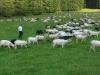 Fauna v Kościeliské dolině